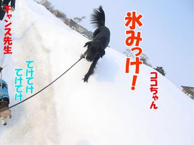 チャンスとティアラ+ココ-20120224-2-400.jpg