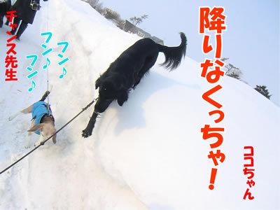 チャンスとティアラ+ココ-20120224-3-400.jpg
