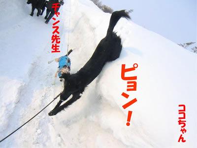 チャンスとティアラ+ココ-20120224-4-400.jpg