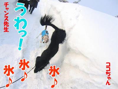 チャンスとティアラ+ココ-20120224-5-400.jpg
