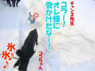 チャンスとティアラ+ココ-20120224-6-400.jpg
