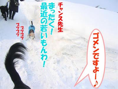 チャンスとティアラ+ココ-20120224-7-400.jpg
