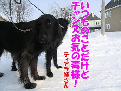 チャンスとティアラ+ココ-20120224-8-400.jpg