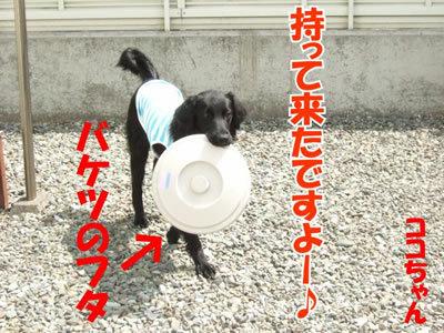 チャンスとティアラ+ココ-20100506-2-400.jpg