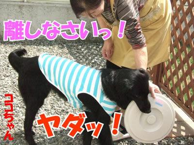 チャンスとティアラ+ココ-20100506-3-400.jpg