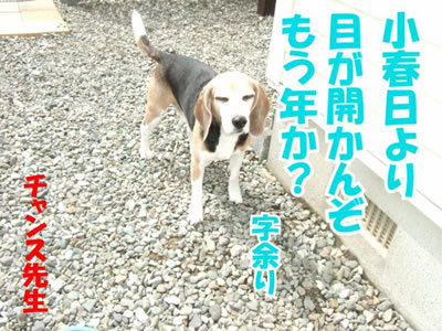 チャンスとティアラ+ココ-20100506-6-400.jpg