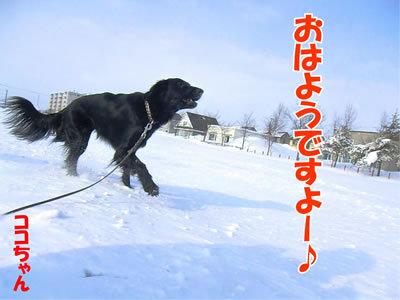 チャンスとティアラ+ココ-20120226-1-400.jpg
