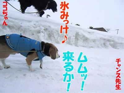 チャンスとティアラ+ココ-20120226-2-400.jpg