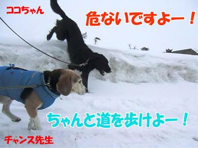 チャンスとティアラ+ココ-20120226-3-400.jpg