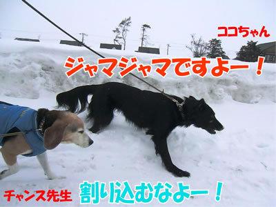 チャンスとティアラ+ココ-20120226-4-400.jpg