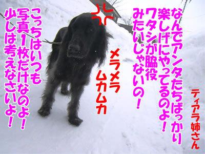 チャンスとティアラ+ココ-20120226-5-400.jpg