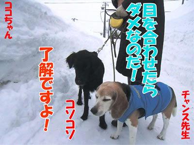 チャンスとティアラ+ココ-20120226-6-400.jpg