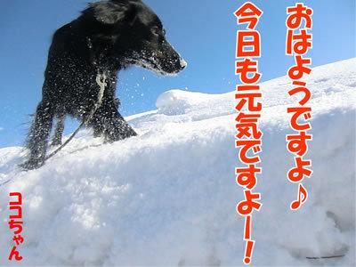 チャンスとティアラ+ココ-20120227-1-400.jpg