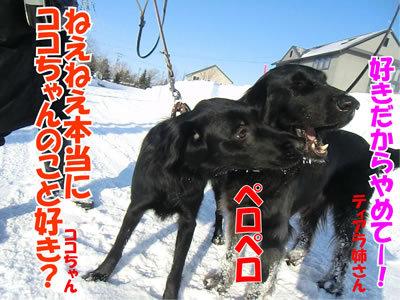 チャンスとティアラ+ココ-20120227-2-400.jpg