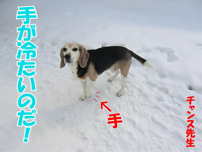 チャンスとティアラ+ココ-20120227-3-400.jpg
