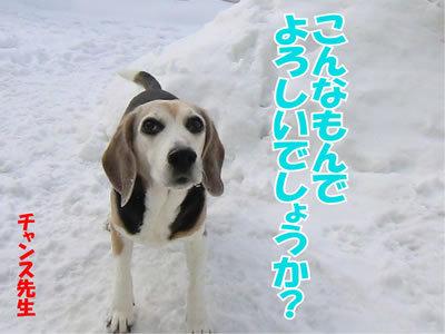 $チャンスとティアラ+ココ-20120227-7-400.jpg