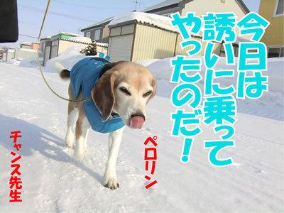 チャンスとティアラ+ココ-20120228-2-400.jpg