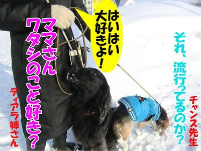 チャンスとティアラ+ココ-20120228-3-400.jpg