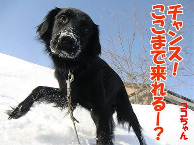 チャンスとティアラ+ココ-20120228-6-400.jpg