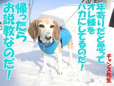 チャンスとティアラ+ココ-20120228-7-400.jpg