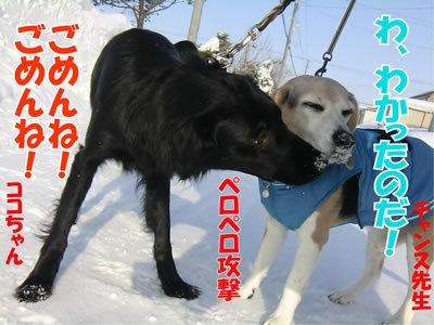 チャンスとティアラ+ココ-20120228-8-400.jpg