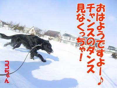 チャンスとティアラ+ココ-20120229-1-400.jpg
