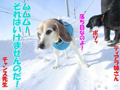 チャンスとティアラ+ココ-20120229-2-400.jpg