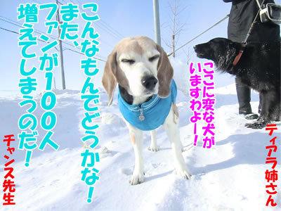 チャンスとティアラ+ココ-20120229-5-400.jpg
