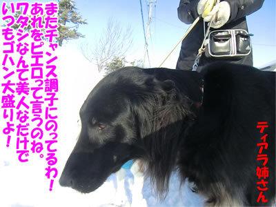 チャンスとティアラ+ココ-20120229-6-400.jpg