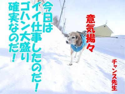 チャンスとティアラ+ココ-20120229-7-400.jpg