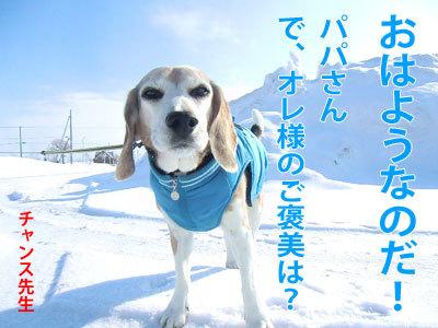 チャンスとティアラ+ココ-20120322-1-400.jpg