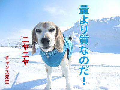 チャンスとティアラ+ココ-20120322-2-400.jpg