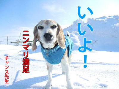チャンスとティアラ+ココ-20120322-3-400.jpg