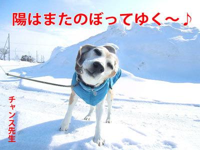 チャンスとティアラ+ココ-20120322-6-400.jpg