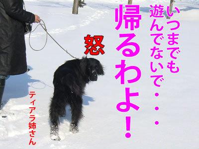 チャンスとティアラ+ココ-20120322-9-400.jpg