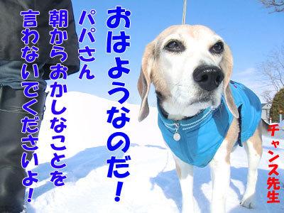 チャンスとティアラ+ココ-20120323-1-400.jpg
