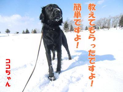 チャンスとティアラ+ココ-20120323-2-400.jpg