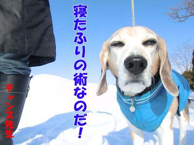 チャンスとティアラ+ココ-20120323-3-400.jpg