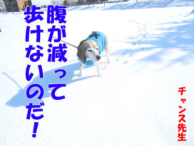 チャンスとティアラ+ココ-20120323-4-400.jpg