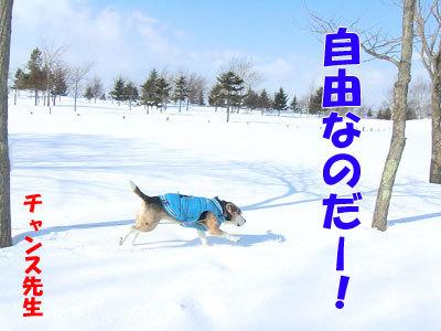 チャンスとティアラ+ココ-20120323-5-400.jpg