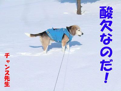チャンスとティアラ+ココ-20120323-6-400.jpg