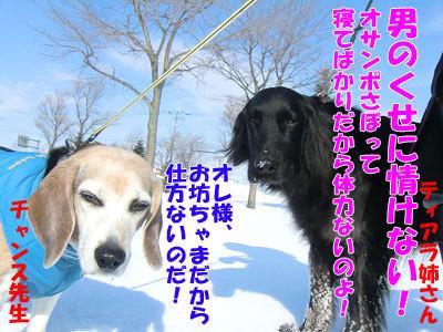 $チャンスとティアラ+ココ-20120323-7-400.jpg