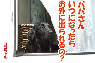 チャンスとティアラ+ココ-20100626-4.jpg