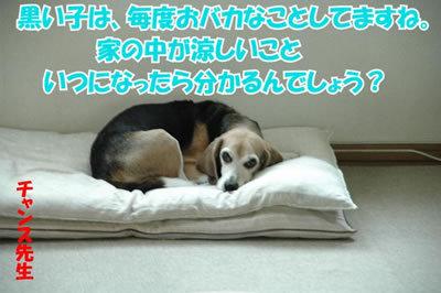 チャンスとティアラ+ココ-20100626-8.jpg