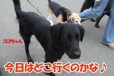 チャンスとティアラ+ココ-20100702-1.jpg
