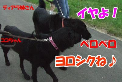 チャンスとティアラ+ココ-20100702-2.jpg