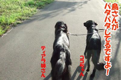 チャンスとティアラ+ココ-20100702-4.jpg