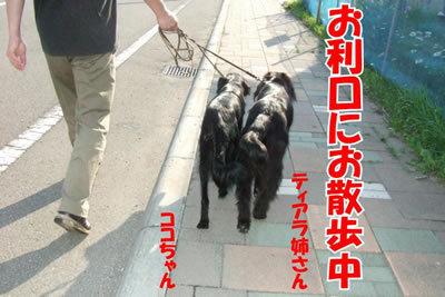 チャンスとティアラ+ココ-20100702-5.jpg