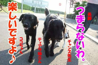 チャンスとティアラ+ココ-20100702-6.jpg