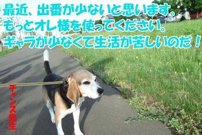 チャンスとティアラ+ココ-20100702-7.jpg